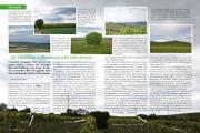 RWM 15:  Die Selzstellung in Rheinhessen sollte Joffre bremsen